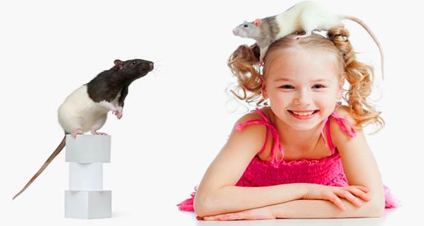 Ребенок играется с крысами