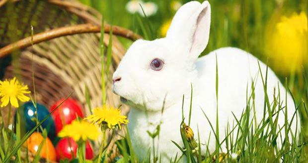 Пасхальный кролик- важный символ праздника у католиков