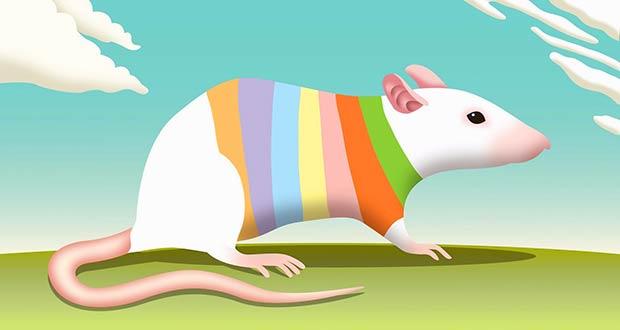 Разноцветная крыса
