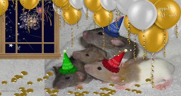 Символы года 2020 - Крысы: встречают Новый год