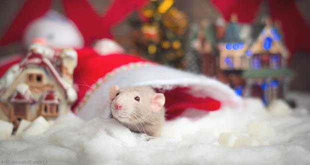 Новогодний покровитель грядущего года - маленький крысенок
