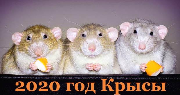 C Новым 2020 годом Крысы по восточному календарю