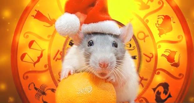 Белая Крыса с апельсином