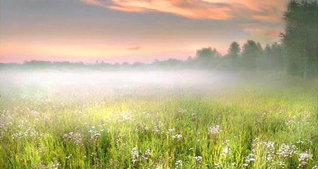 Раннее туманное утро летом