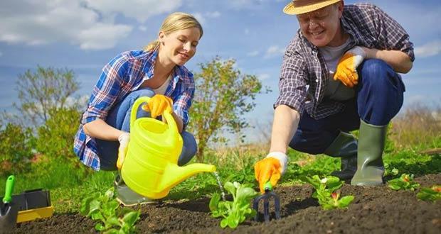 Огородник с дачником садят рассаду
