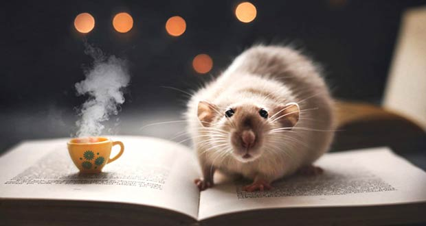 Как нужно встречать год Крысы 2020